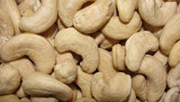 Salty Cashew Nuts 100g (OBM, ODM, & OEM)  -