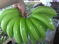 Premium Quality Fresh Green Cavendish Banana -