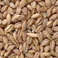 BARLEY WITHOUT BARK - IN NATURA -