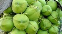 有机椰子 -