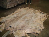 salted cow hides Genuine Leather Dry And Wet Salted Donkey/Goat Skin /Wet Salted Cow Hides -