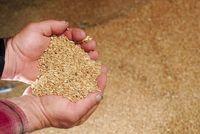 Orgânica do trigo -