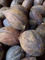 Piassava种子 -