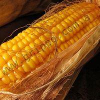 玉米黄色 -