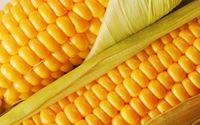 玉米,黄玉米,白玉米,爆米花 -