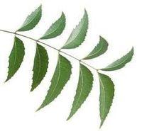 Pó nim (Azadirachta indica) -