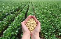 大豆转基因 -