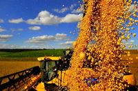 Soybeans -