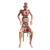 Whole body dissection plastinated specimen  -