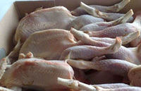 Halal Certify Frozen Whole Chicken -