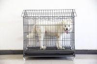 jaula del animal doméstico con el tubo semi cuadrado, inclinado versión de cabina -
