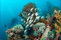 4 Night / Diving Package -