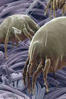 Impermeabilização de tecidos -