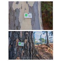 Mantenimiento Arboreal -