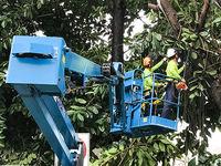 La poda y el corte de árboles -