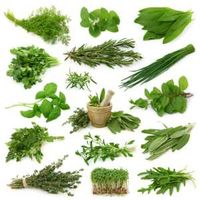 All Kind Of Plant Extract, Plant seed, Plant Bark, Flakes -